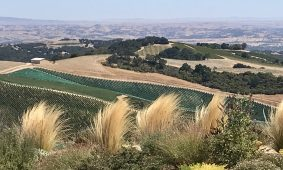 Paso Robles Wine Country Guide- my way.
